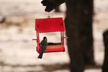 Handmade Cute Red Bird House Feeder In The Park On The Tree For Feeding Wild Birds And Squarels, Two Wild Snowbirds Inside Eating The Seeds