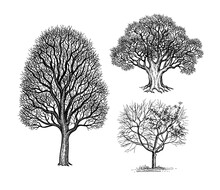 Ink Sketches Of Winter Trees.