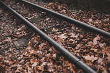 Railroad Tracks In The Forest