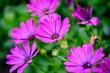 Leinwandbild Motiv Flores