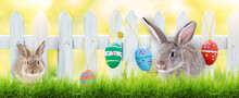 Greeting Card Bunny With Eggs, Easter Eggs On The Fence In The Beautiful Sunny Nature.