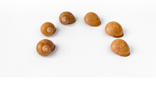 Row Of Empty Snail Shells Isolated On White Background.