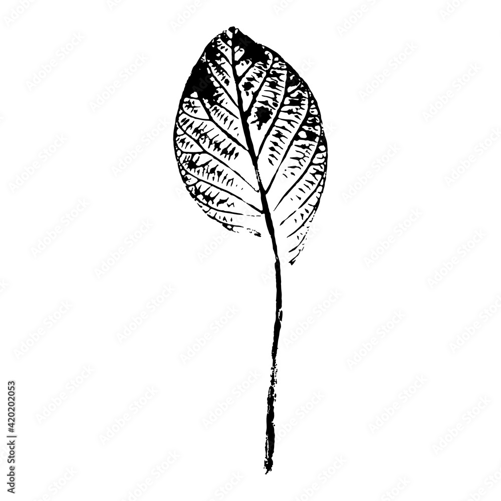 Fototapeta Imprint of a leaf of a Goan tree. Black silhouette of a leaf on a white background. Suitable for design, pattern, print, postcard. Botanical vector illustration.