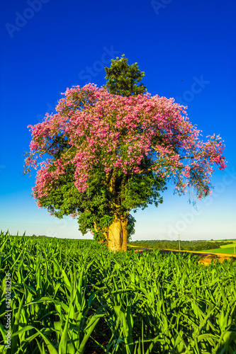 Obraz flowering tree, nature and environment   - fototapety do salonu