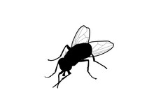 Silhouette Mosca