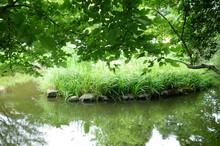 真夏日、森林公園内の緑に囲まれた池の湖畔風景
