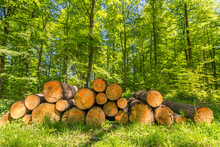 Pile Of Freshly Cut Logs In The Forest In Spring With Green Foliage
