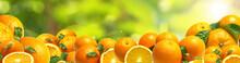 Oranges From Your Favorite Garden