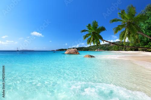 Fototapeta beach with palm trees obraz na płótnie