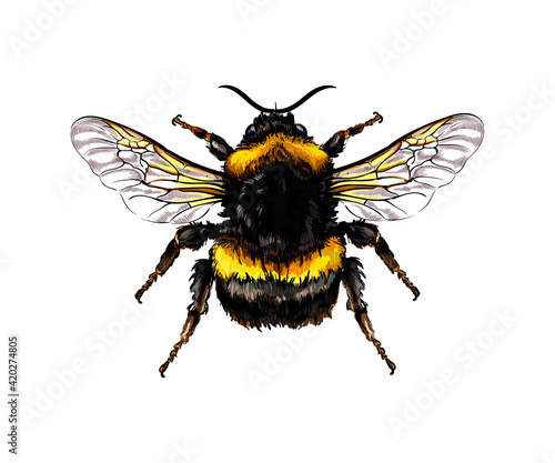 Valokuva Bumblebee from a splash of watercolor, colored drawing, realistic