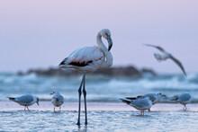 Flamingo At The Beach At Sunset