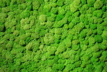 Natural Green Background. Green Moss Close Up. Background With Vegetation On Tepo Eco-friendly. Green Eco Texture. Natural Pattern. Background With Natural Plants. Texture On Topic Ekofrendli
