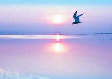 La Belleza Del Mar En Calma Al Amanecer