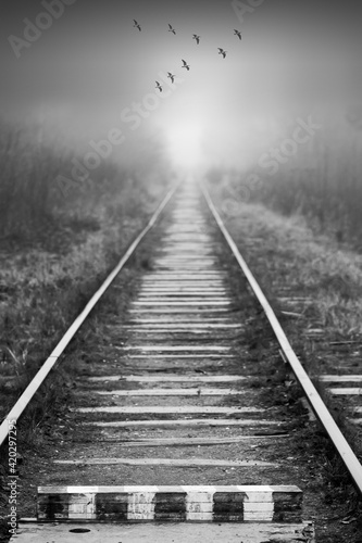 Canvas Birds fly over empty abandoned railway in foggy forest