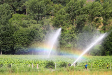 Rainbow And Water Sprinkler Spraying Water