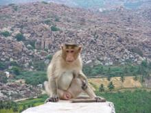 Monkey On Stone In Hampi, India