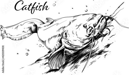 Fototapeta Ryba sum w wektorach, rysunek czarno-biały obraz