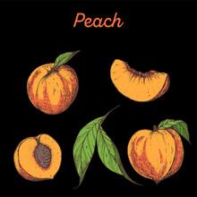 Peach Hand Drawn Vector Illustration. Peach Slice.
