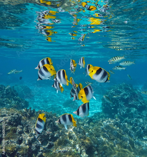 Obraz na plátně Group of tropical fish in the ocean partially reflected under water surface, dou