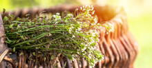 Bunch Of Shepherds Purse,old Wicker Basket With For Preparation Of Non-traditional Medicine Of Bursa Pastoris Medicinal Herbs. Homeopathy Medicine.