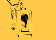 A Funny Black Cat Peeks Out Of A Ragged Hole In Yellow Paper On Which A Big Suitcase And A Woman Rolling It Around The Station Are Drawn. The Concept Of Transportation, Pets In Travel. Scetch.