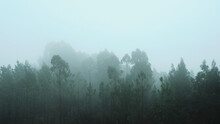 Mesmerizing View Of A Foggy And Creepy Forest With Beautiful Tall Trees