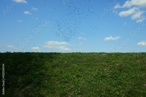Fototapeta Birds obraz