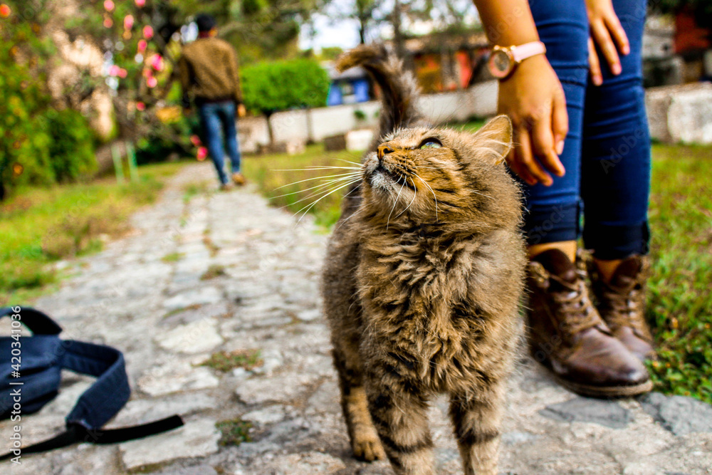 Fototapeta Gato, mascota, felino.