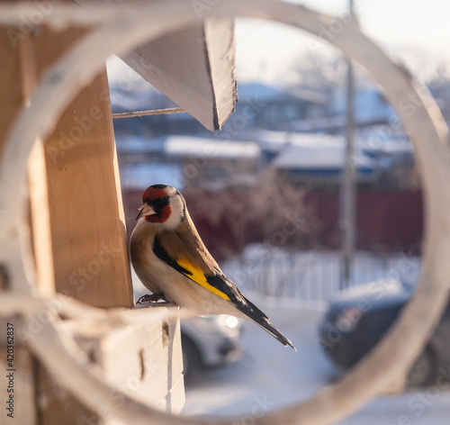 Fotografie, Obraz bird on a branch