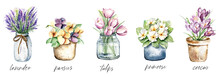 Spring Flowers In Pots, Watercolor Painting. Floral Illustration Isolated On White. Perfectly For Stickers, Poster, Greeting Design.
