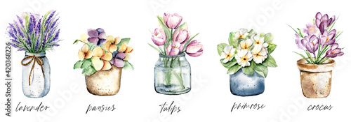 Fotografia Spring flowers in pots, watercolor painting