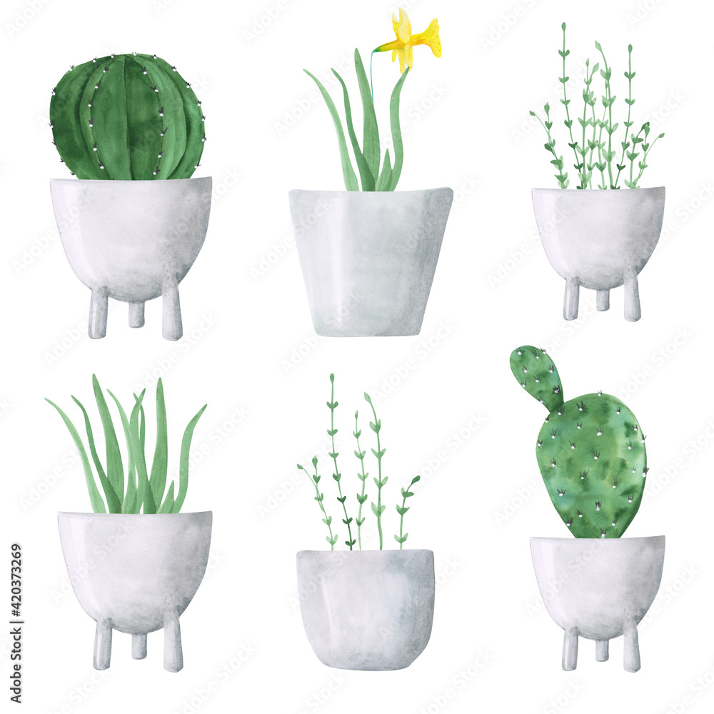 Fototapeta Hand-drawn collection of narcissus flower, aloe, cactus in pots. Set of 6 watercolor potted plants isolated on a white background. Botanical illustration. Greenery clipart. Minimal home plant print.
