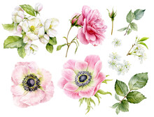 A Set Of Beautiful Delicate Flowers. Watercolor Illustrations Of Anemone Flowers, Rose, Apple Tree, Cherry.