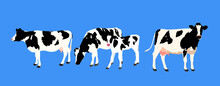 Holstein, Cow And Calf