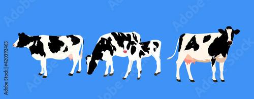 Fotografia Holstein, cow and calf