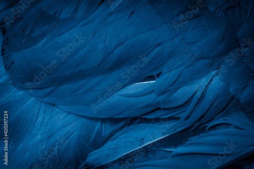 Fotografie, Obraz macro photo of blue hen feathers. background or textura