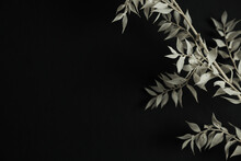 Pale Green Dry Plant Branch On Black Background. Aesthetic Minimal Stylish Still Life Floral Composition.