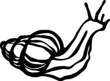 Hand Drawing Line Art Snail
