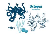 Octopus Vector Illustrations