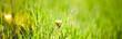 Leinwandbild Motiv Fresh green grass abstract background