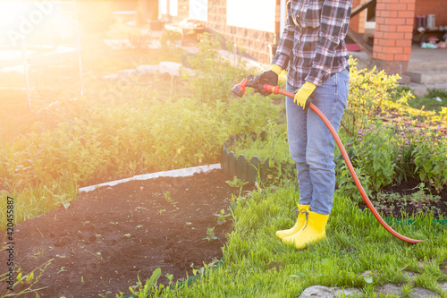 Woman gardener watering her garden beds with hose on sunny warm spring day Fototapet