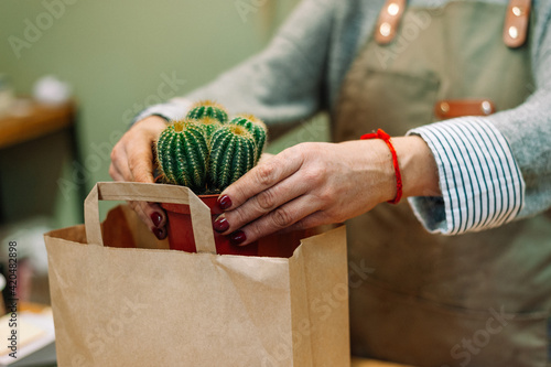 Hands holding a cactus plant over a paper bag