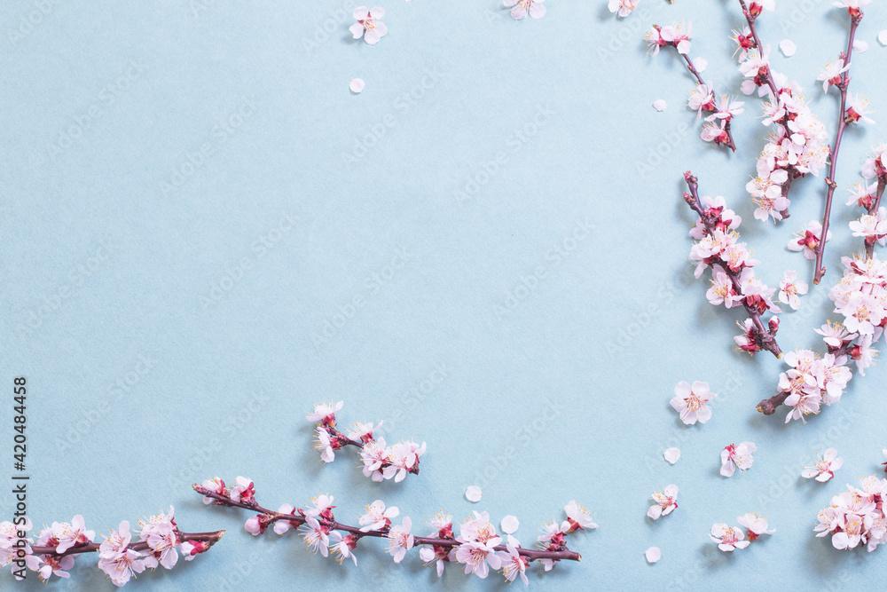 Fototapeta pink cherry flowers on  paper background