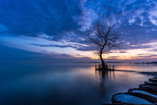A Dead Tree On The Beach At Sunrise Time.