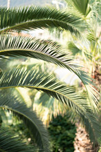 Palm Leaves On A Sunny Day