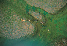 Flamingos Wade In The Water Or Fly Over Abstract Formations Of A Delta.