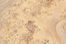 Macro Photo Of Wood Cross Section Wood Grain Texture Background