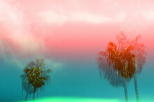 Colorful Double Exposure Of California Palm Trees