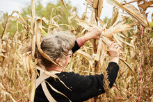 Farmer Harvests Corn