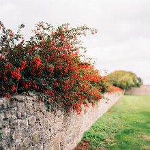Red Over The Wall